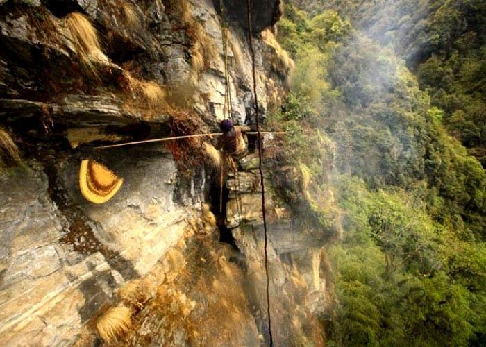 Nepal Honey Hunting