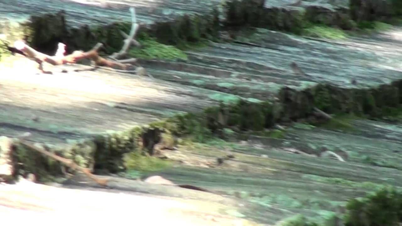 Best Moss Removal Cedar Roof Mission Hills Kansas Cedar 400 x 300