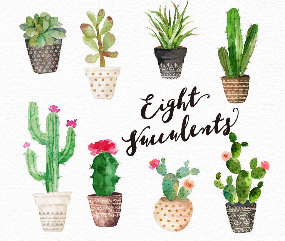 8 Watercolour succulent arrangements (10002500 px)8