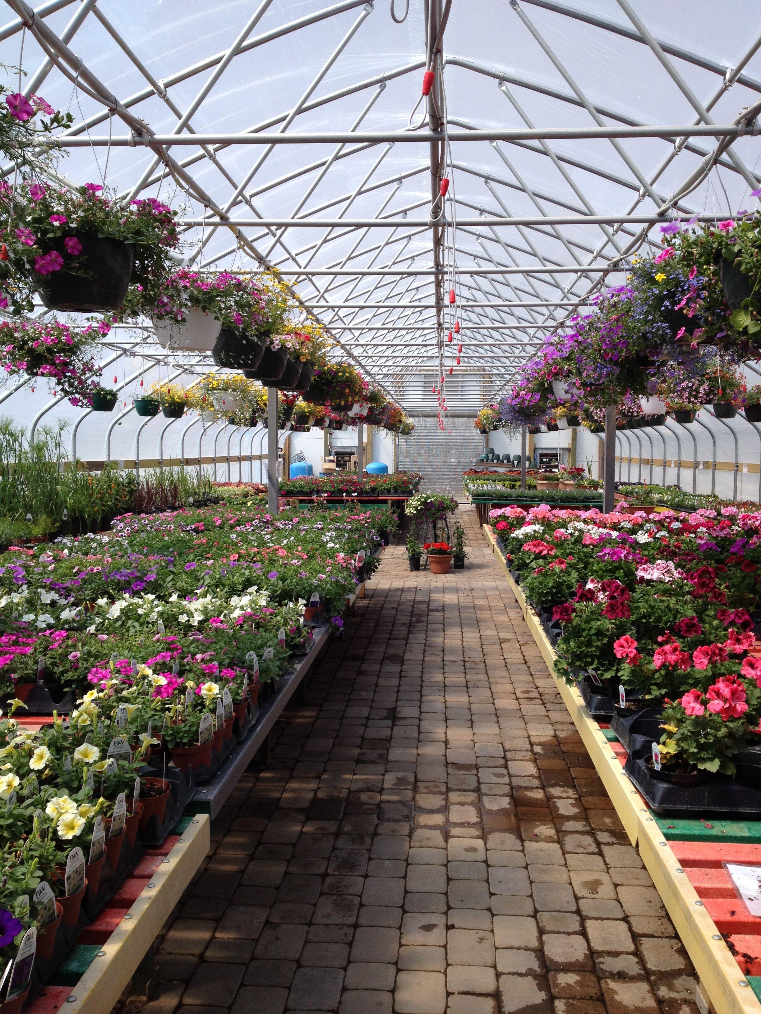Buxton S Garden Farm Floricultura Plantas Jardim