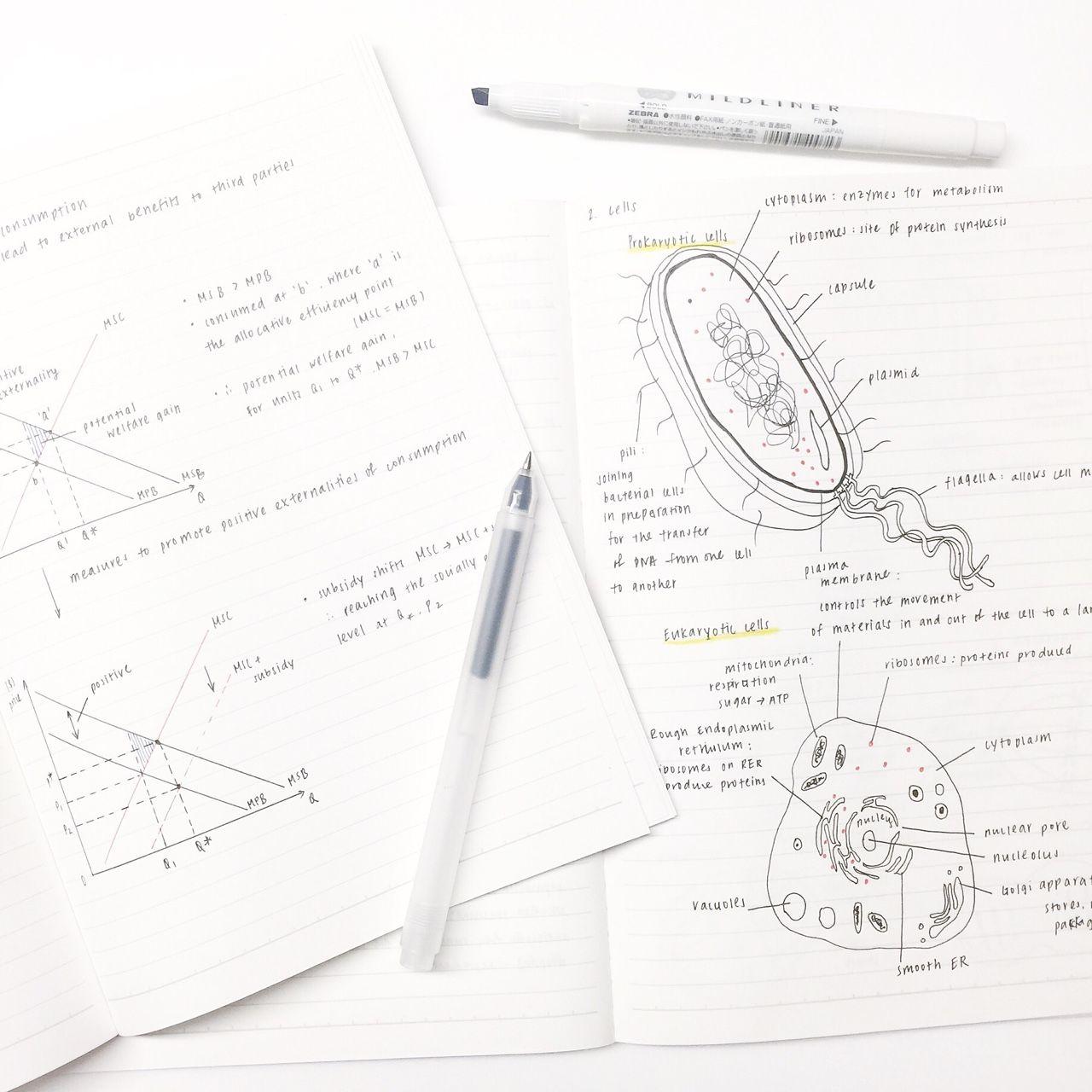 Revis Ign Biology Economics Studygram