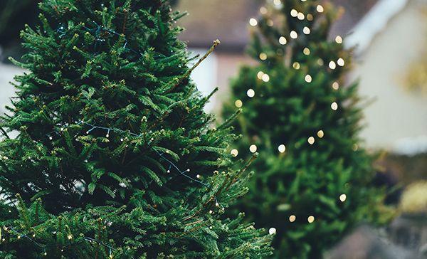 rbol de navidad artificial o natural - Arbol De Navidad Artificial