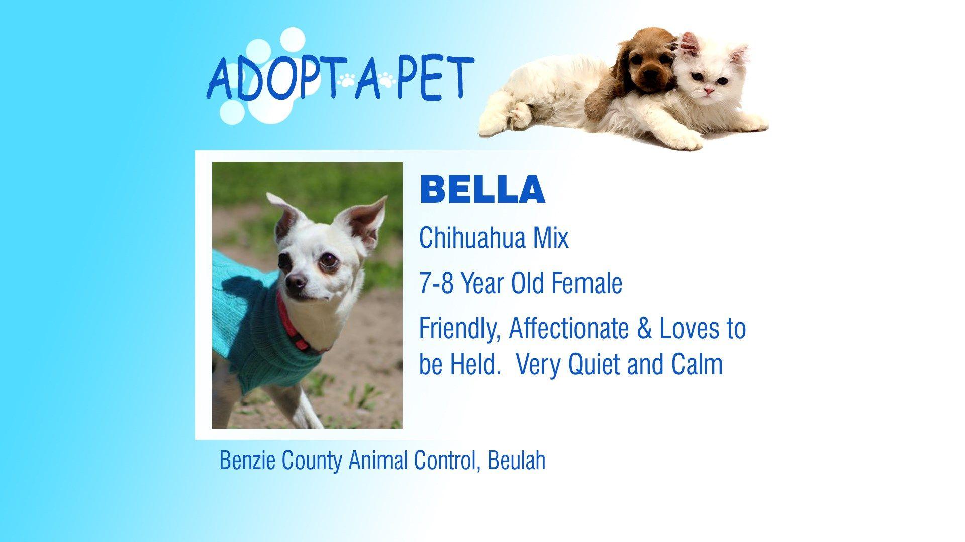Adopt a Pet Tuesday Jimmy, Drover & Bella Pets