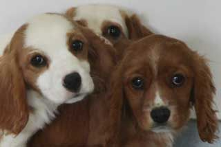 Rspca Rescues 100 Dogs In Puppy Farm Raid Charge Them With The Maximum Penalty I Say Dogs Puppies Rescue