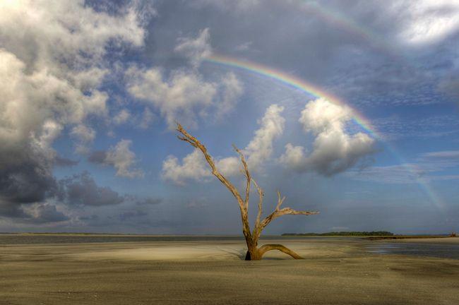 Folly Beach Sc County Park South Carolina