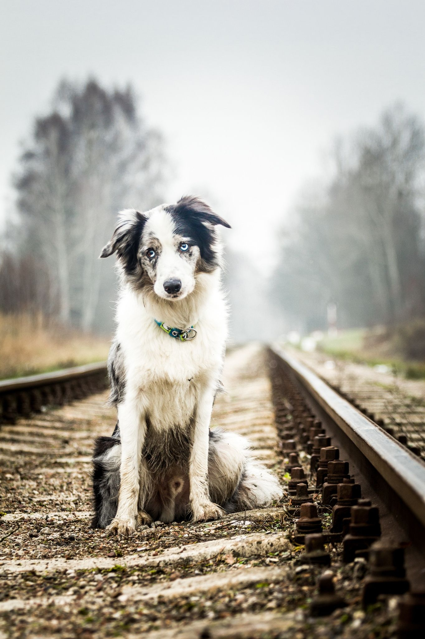 Oh my sweet boy null Collie, Border collie, Dogs