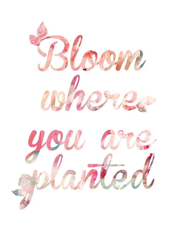 Bloom Where You Are Planted Quote, Art Print, Coral