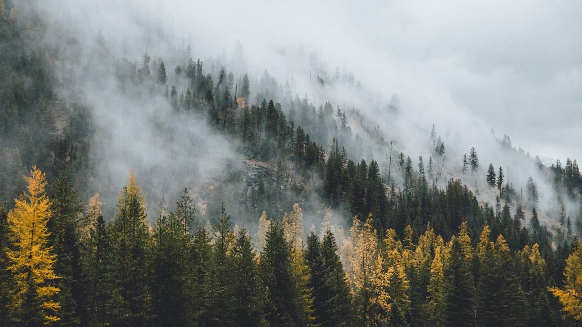 Wilderness Wallpaper Nature Tree Fog Woody Plant Mountain Mist In 2021 Forest Wallpaper Nature Pine Tree Silhouette Hd wallpaper tent camping forest fog