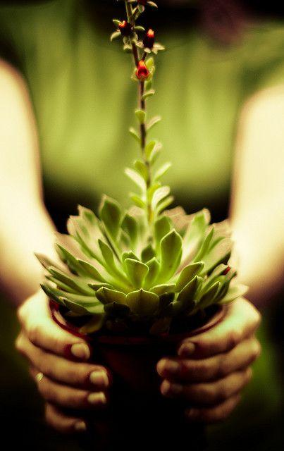 361 Of 365 Echeveria Avec Images Plante Succulente Planter
