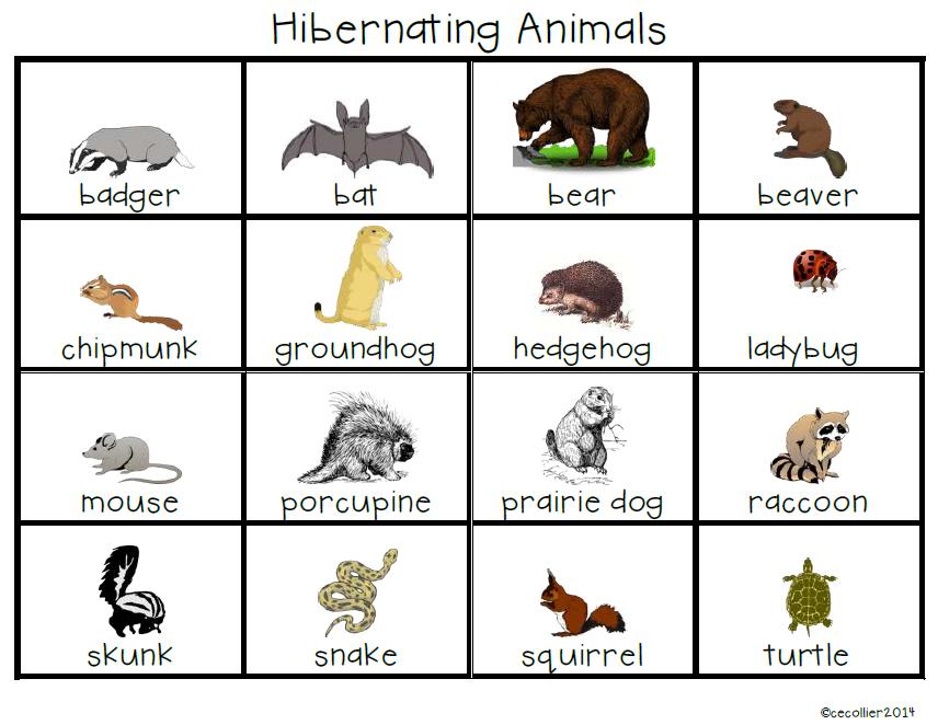 Quels sont les animaux qui hibernent ?