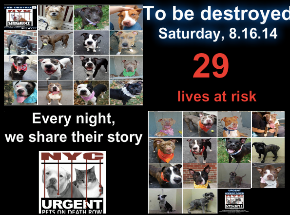 29 lives are scheduled to end tomorrow. Please share their stories everywhere to help give them a future they so deserve. They are in a VERY high kill facility so time is CRITICAL . To rescue a Death Row Dog, Please read this: http://urgentpetsondeathrow.org/must-read/ To view the full album, please click here: https://www.facebook.com/media/set/?set=a.611290788883804.1073741851.152876678058553&type=3