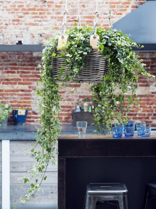 Der Efeu im tollen Hängekorb - Pflanzenfreudede jardin - blumenampel selber machen hangekorb