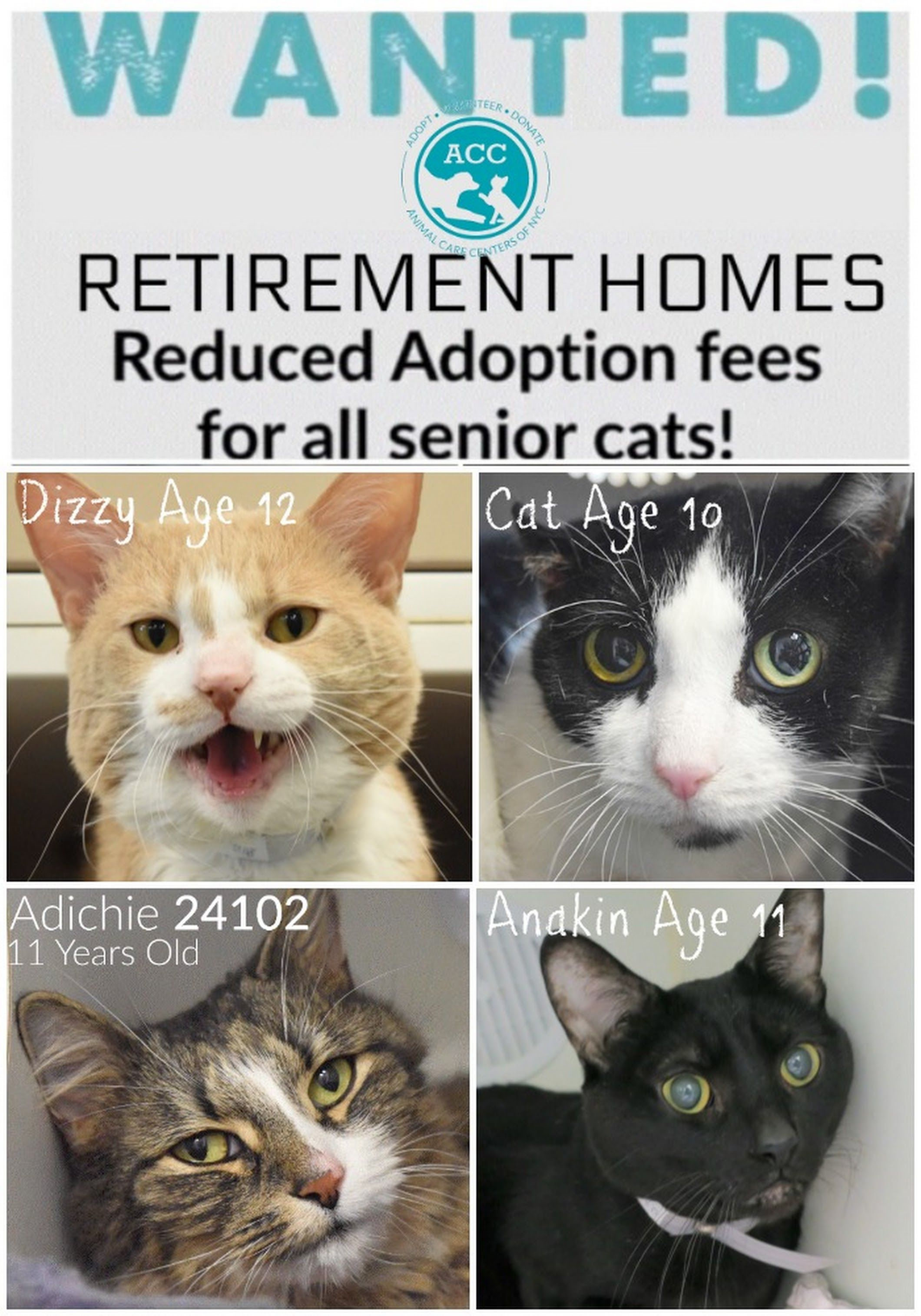 Animal Care Centers Of Nyc Acc Retirement Homes Wanted At Manhattan Acc We Have A Lot Of Senior Kitties Available For Adoption Kitten Rescue Rescue Dogs Cats Kittens
