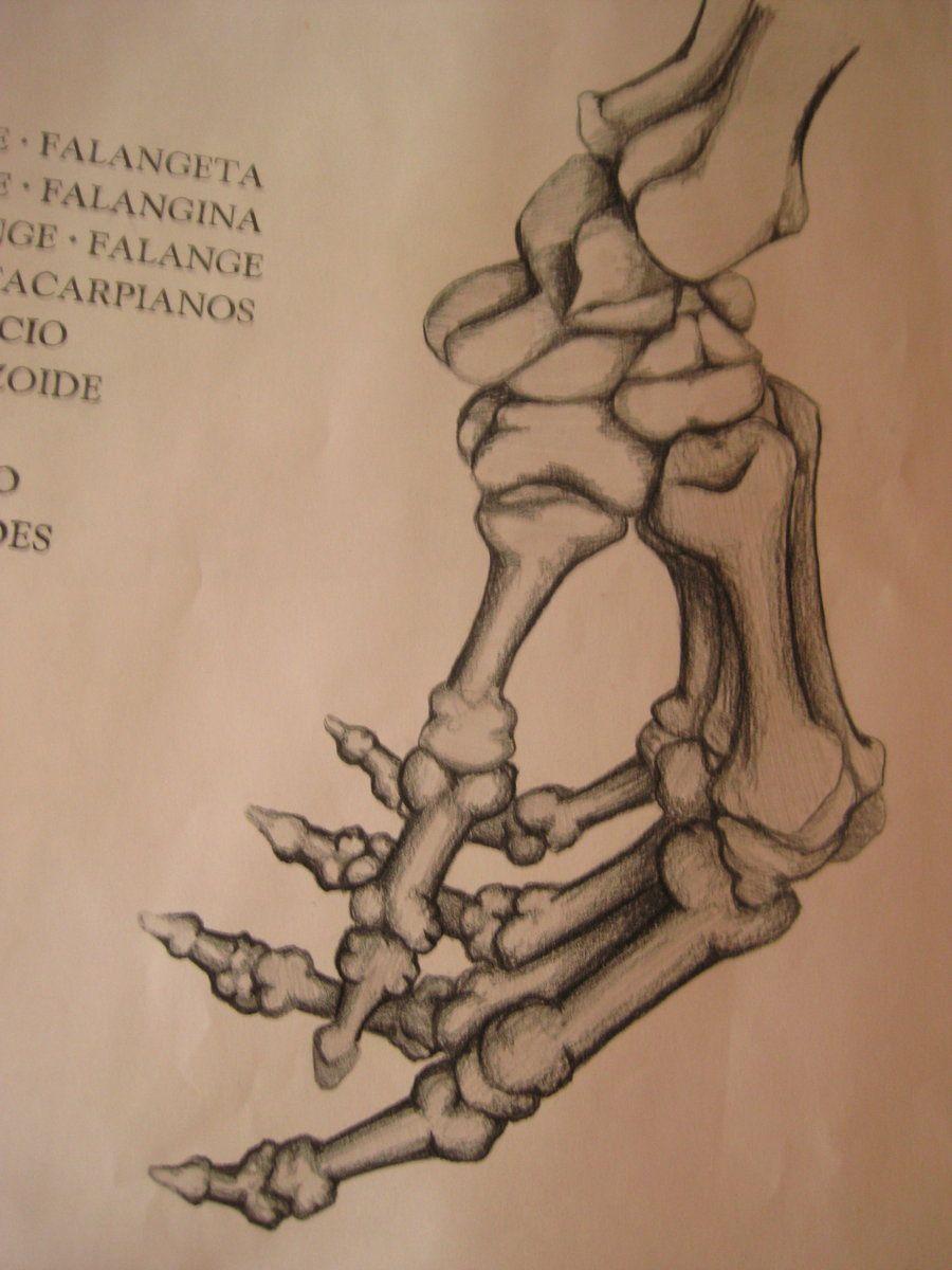 hand bones anatomy - Google Search   Bones   Pinterest   Hand bone ...