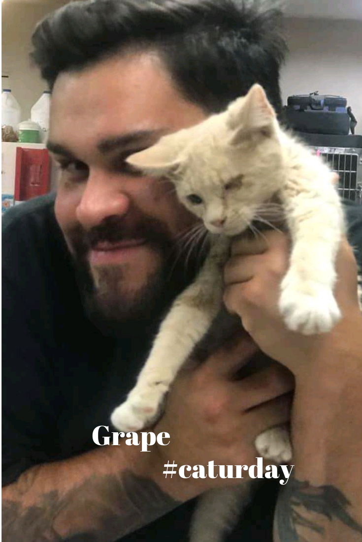 Grape Is Available For Adoption At Imperial County Humane Society Cats For Adoption Cats For Adoptions Near Me Ki With Images Adoption Humane Society Kitten Adoption