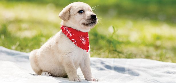 Best Pet Insurance Companies For Puppies Best Pet Insurance Pet