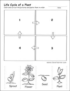 plant life cycle first grade worksheet | Plant life cycle