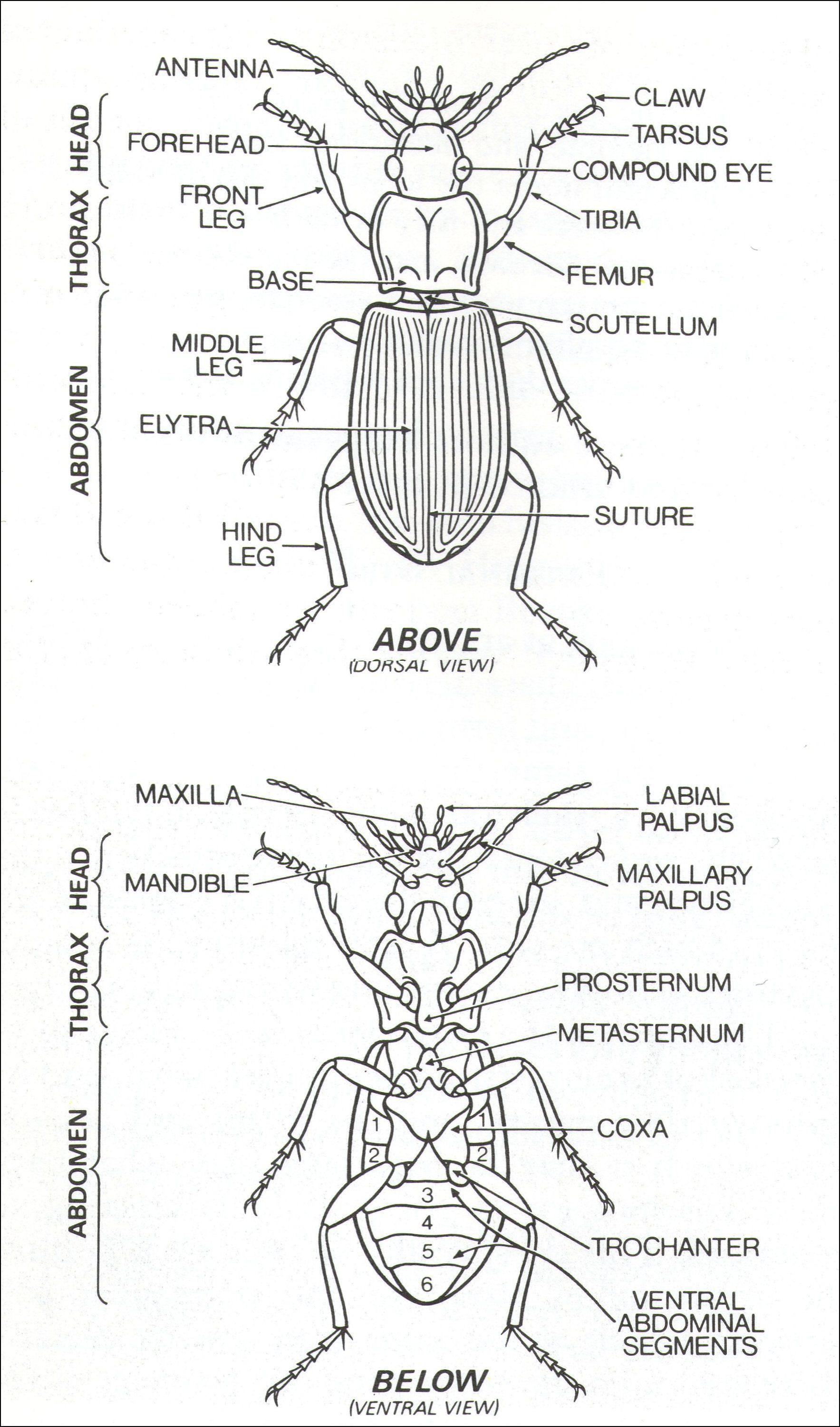 medium resolution of external parts of a generalised insect