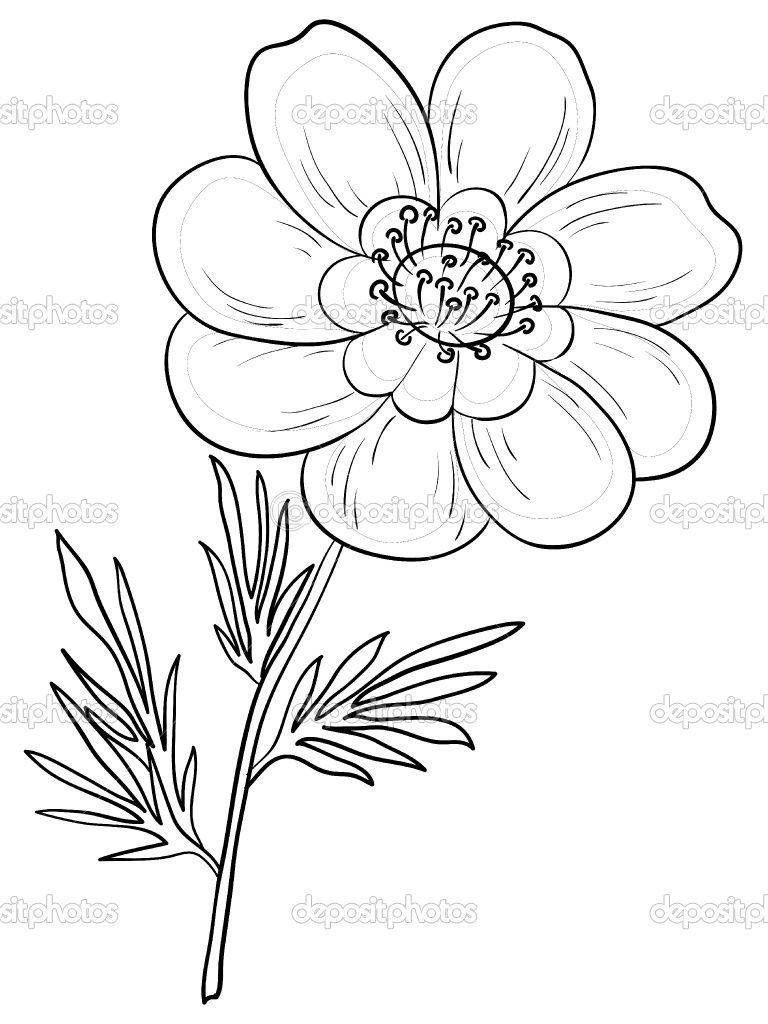 Tatoo Outline Of Daisy Flower Flower Drawing Outline Crafting