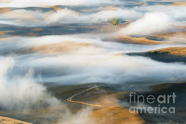 Fog rolls over the rolling hills of the Palouse as the golden light of Dawn glows on the wheat stubble. Steptoe, Washington, USA