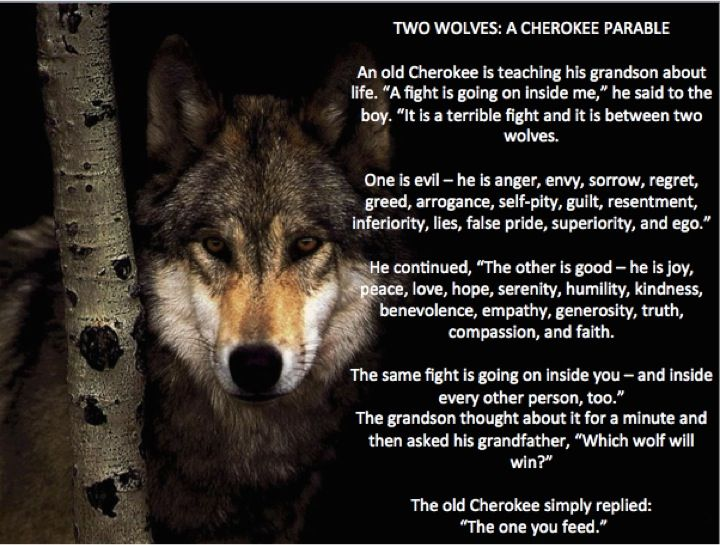 Cherokee Parable about Wolves | Quotes | Wolf spirit animal, Wolf