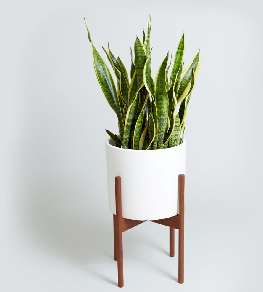 Add a snake plant to your indoor garden.