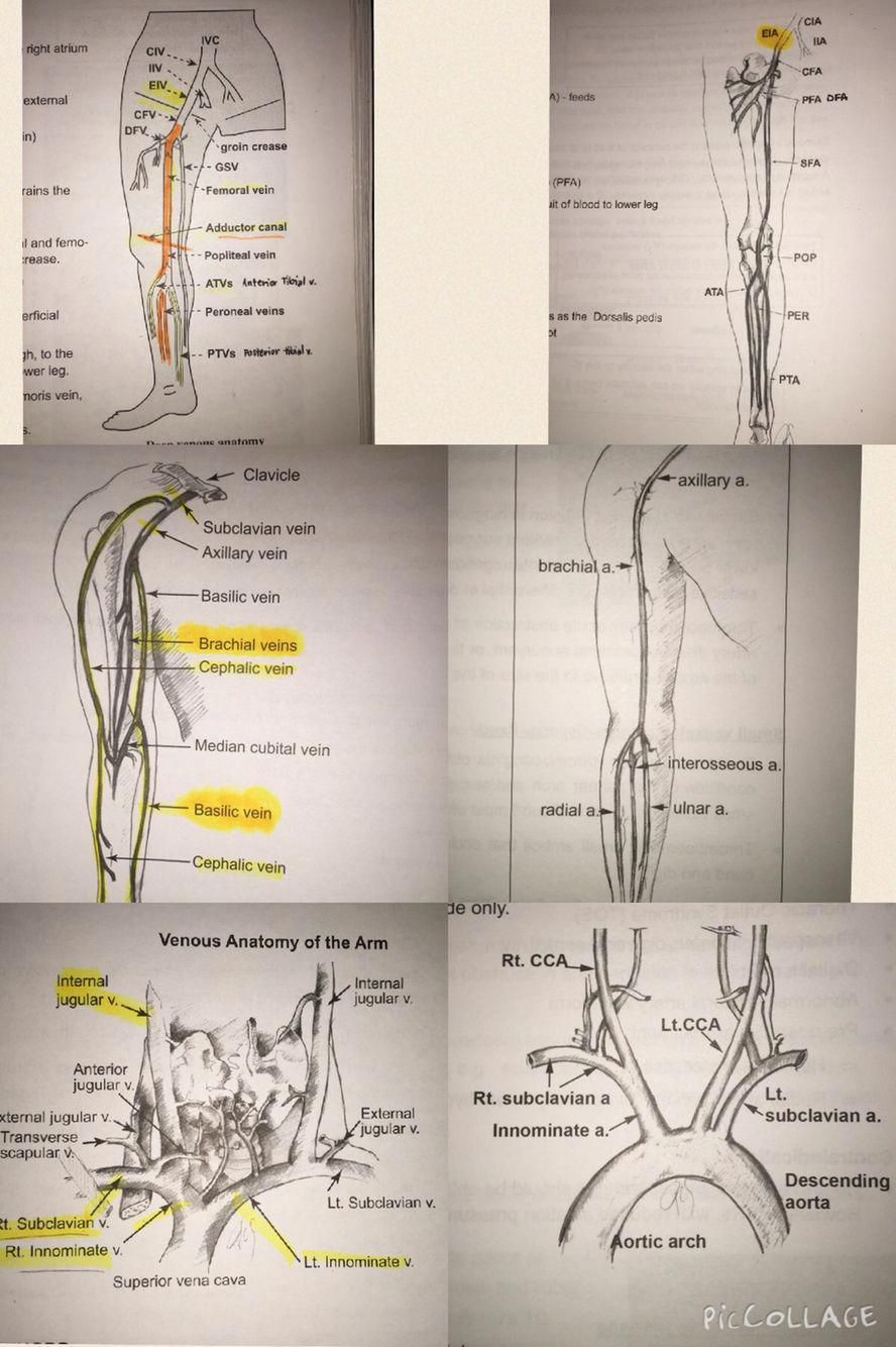 Venous & arterial systems side by side. Upper, lower, neck