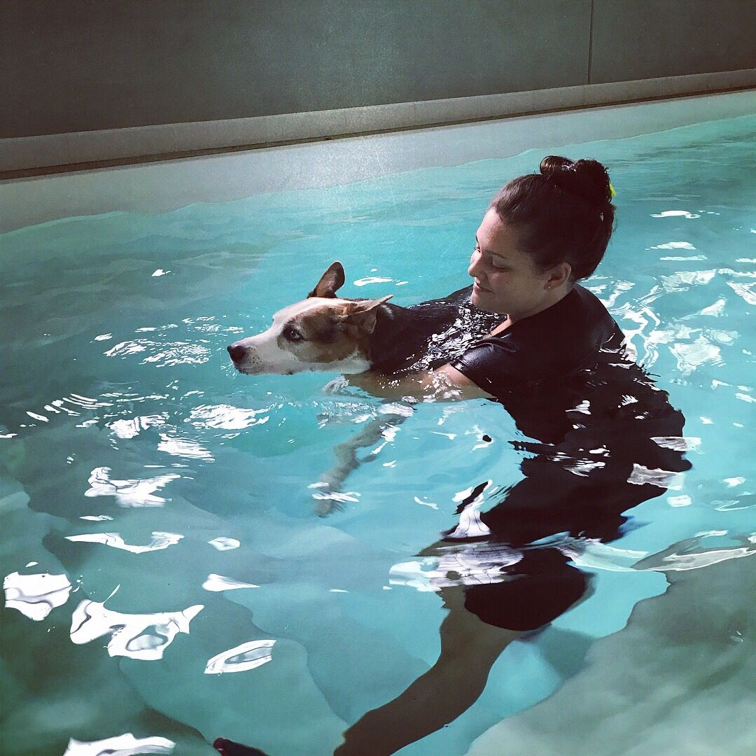 How Hydrotherapy Can Help Water Therapy For Dogs In Orlando Canine Hydrotherapy Orlando Severe Arthritis Hydrotherapy Swimming
