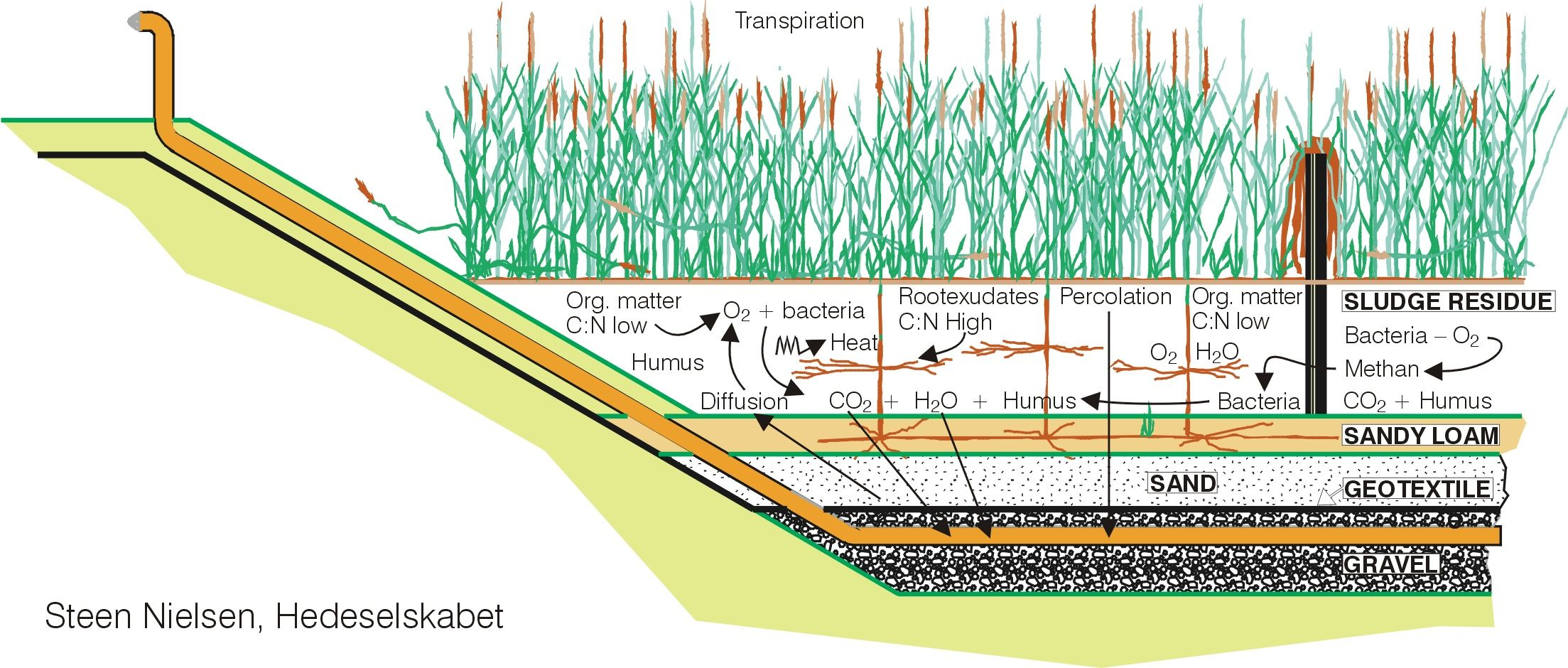 constructed wetlands diagram - Google Search | wastewater ...