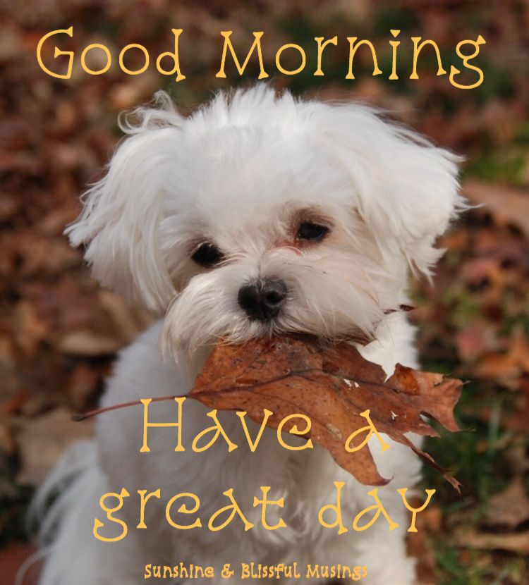 Good Morning !!!! Maltese puppy, Maltese dogs, Teacup