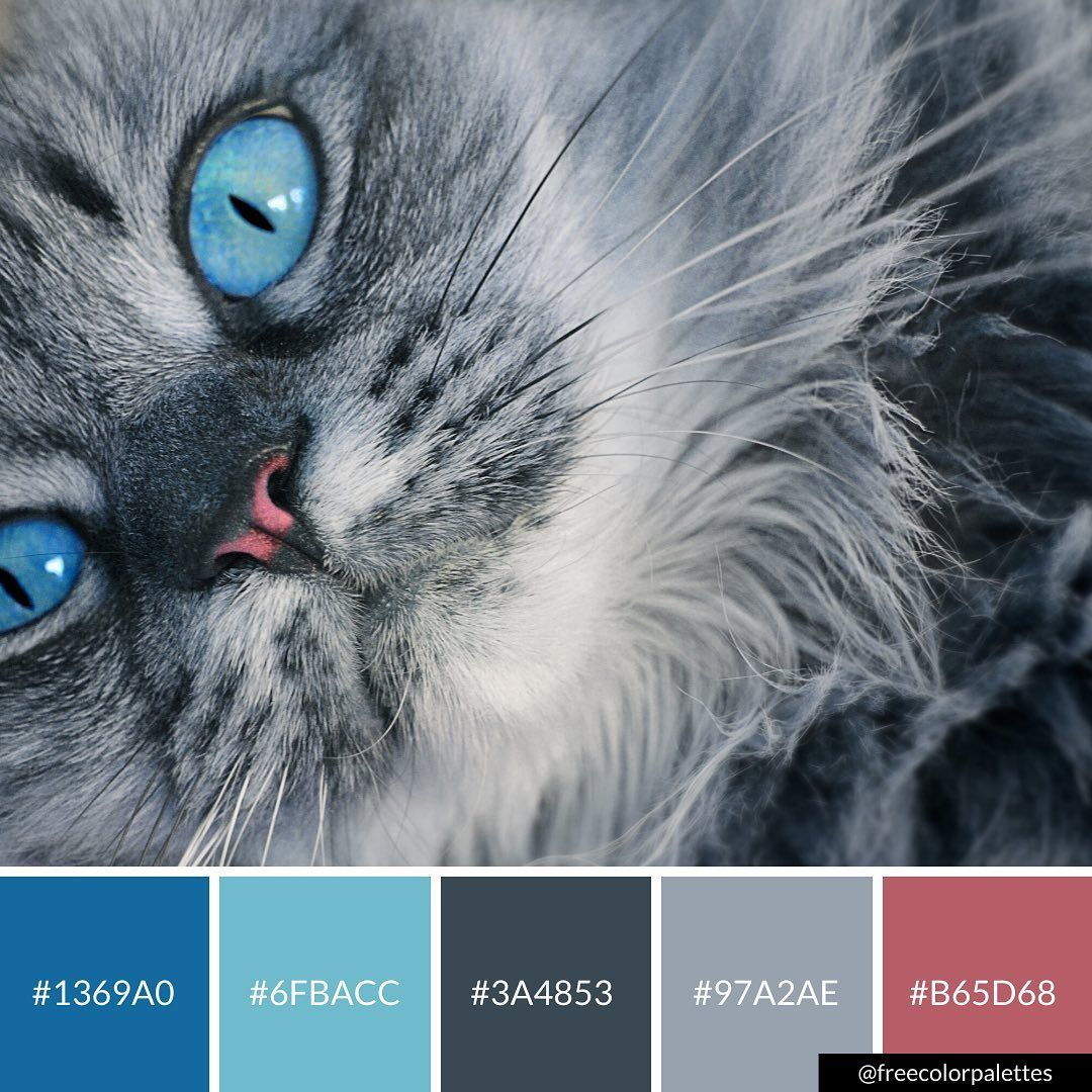 Cats Blue Cool Colors Color Palette Inspiration