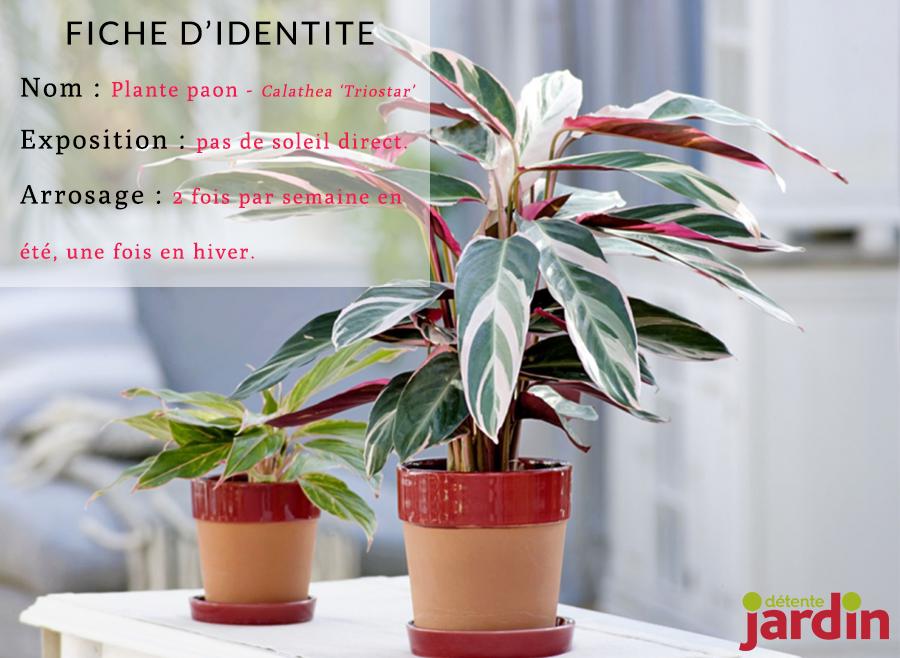 4 plantes d 39 int rieur sp cial d butants les fougeres for Plante qui aime l ombre