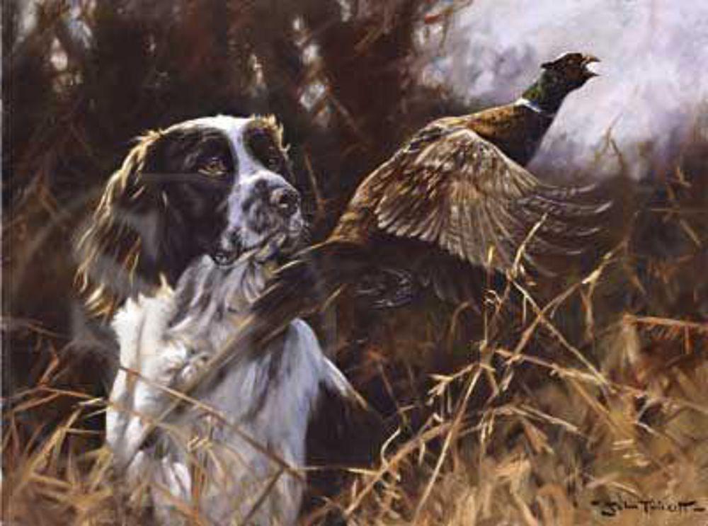 Pheasant Flushed Springer Print By John Trickett Dog Print Art Dog Art Hunting Art