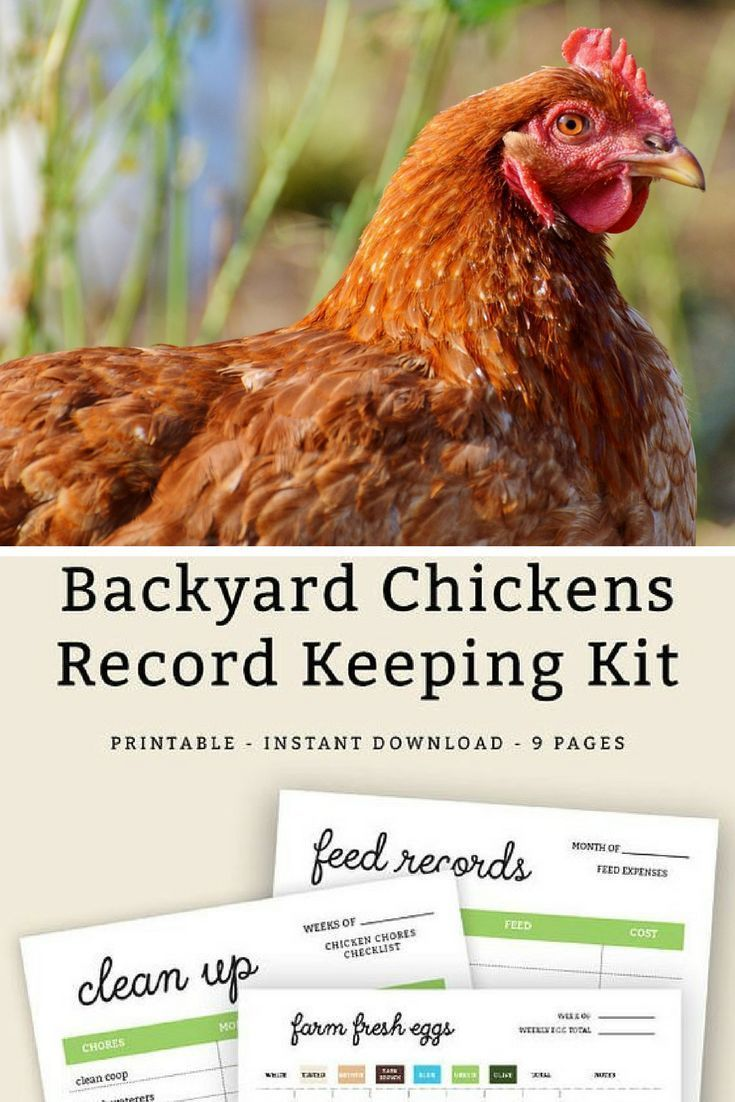 Chickens and chicken coops require some care and this ...