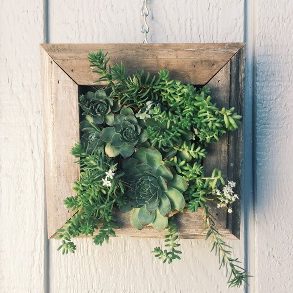 15 Hanging Succulent Planters to Turn Your Walls Into Vertical Gardens is part of Vertical garden City - Looking to make your home an indoor jungle but lack the space  Try hanging succulents!