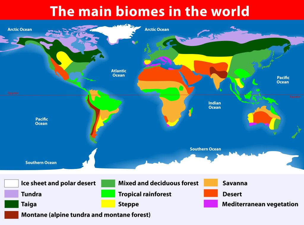 World Biomes | Biomes, Geography and Physical science