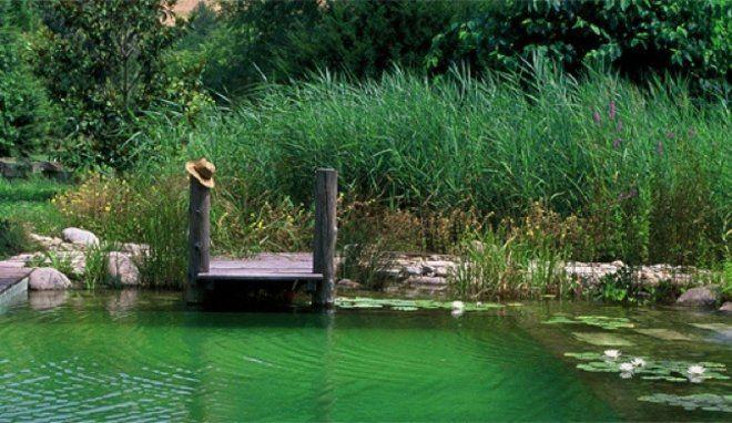 Dossier  les piscines de rêve de notre été Pond and Outdoor decor