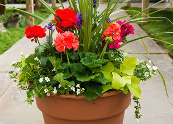 full sun container In the garden Pinterest Plants Container