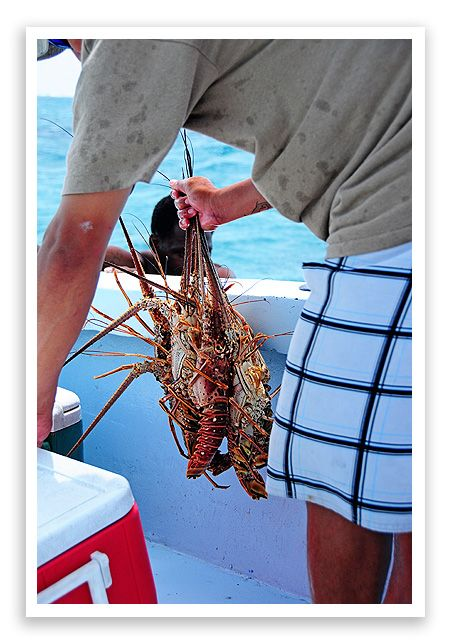 Ambergris caye in belize a day on the sea part i the food for Lobster fishing san diego