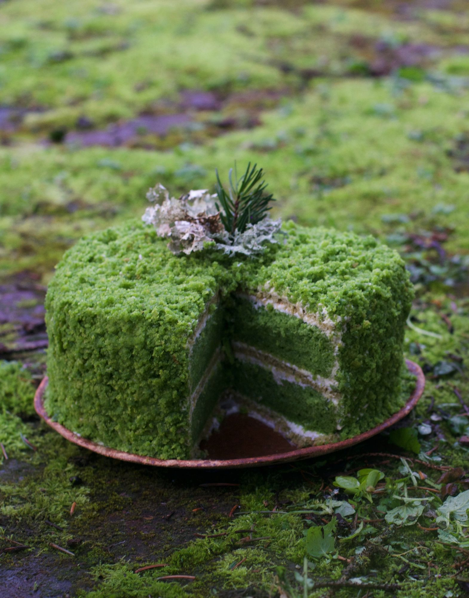 Photo of Nettle Cake: An Ode To Moss Gazing  — The Wondersmith