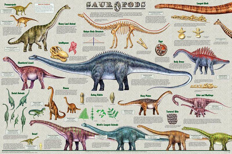 Sauropod Dinosaurs Dinosaur Posters Science Chart Prehistoric Animals