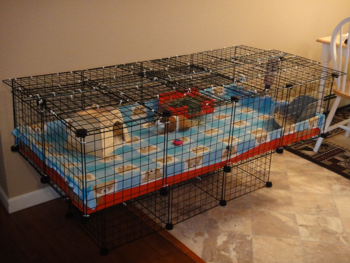2x4 cage with kitty proof lid guinea pig cage photos for Guinea pig cage for 3
