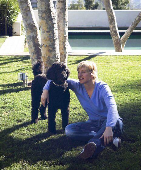 Image result for celebrity poodle owners