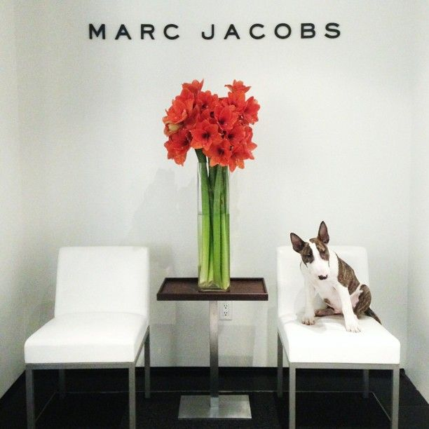 Neville holds court at MARC JACOBS Int'l