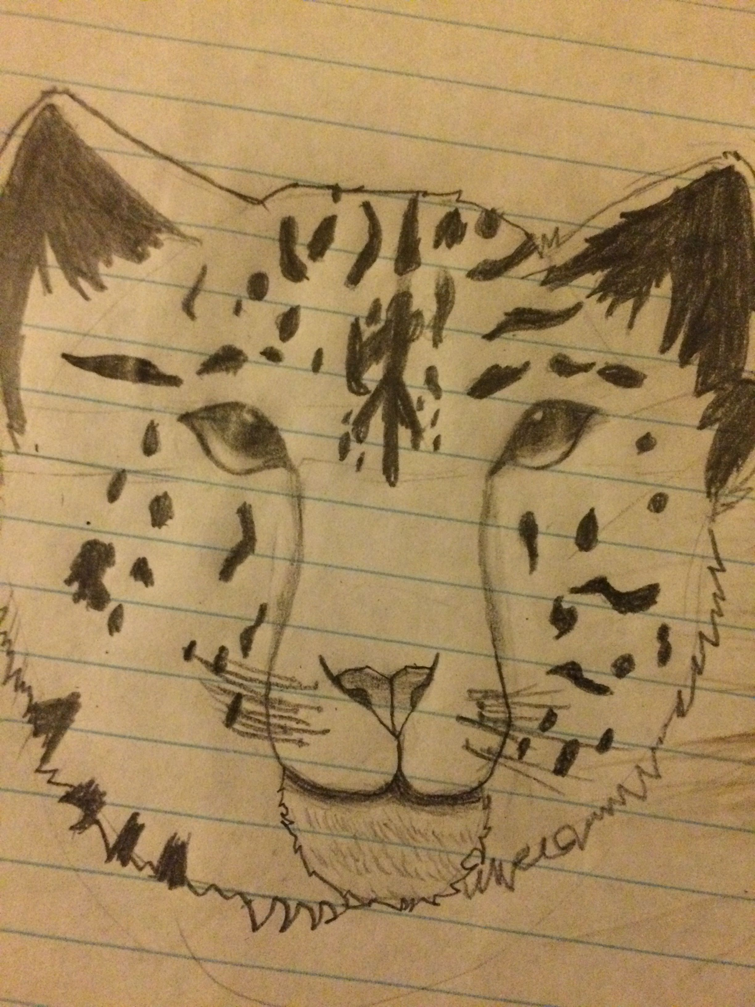 Here S A Drawing I Did For A Project It S A Snow Leopard It Is