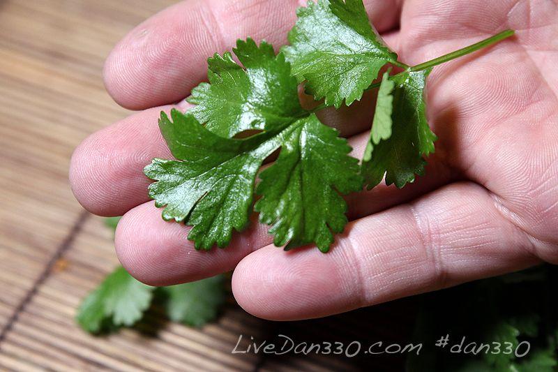 Best way to grow cilantro growing cilantro grow