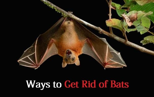 How To Get A Bat Out Of Your Chimney