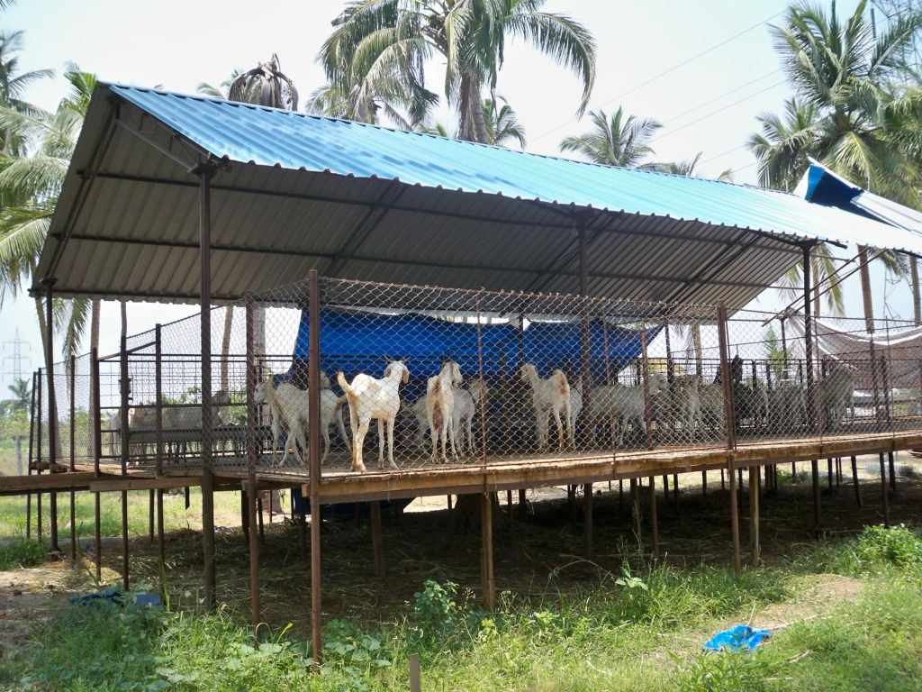Related Image Goat House Goat Shed Poultry Farm Buildings Backyard poultry house design philippines