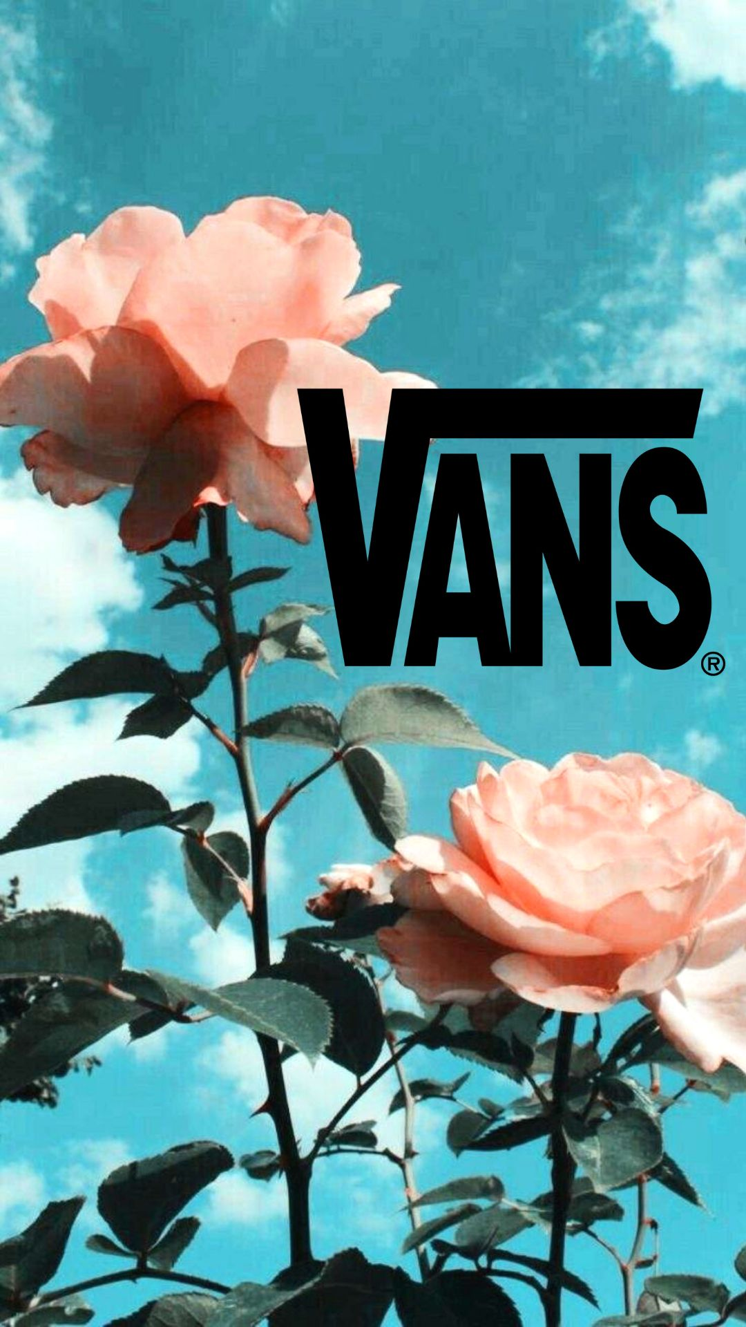 Rose Aesthetic Vans Flowers Tumblr Pink Blue Beauty