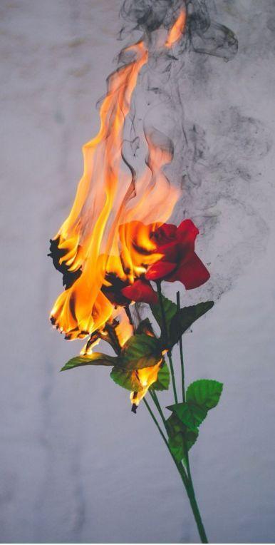 Trend iphone Wallpaper - fire in bloom#wallpaperiphone #tumblr - #bloomwallpaperiphone #fire #iPhone #planodefundo #Trend #Tumblr #Wallpaper #darkiphonewallpaper